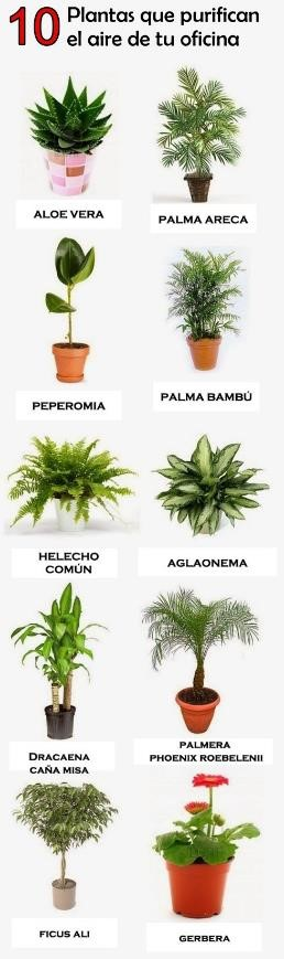 plantas de casas
