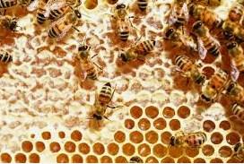 gambar Berita buruk tentang madu dan jerawat