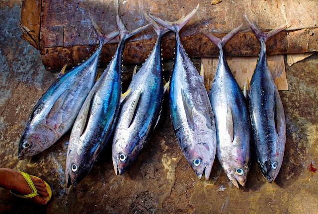 Manfaat Kesehatan Konsumsi Ikan Tuna