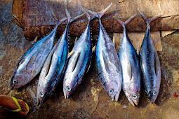 Manfaat Kesehatan Konsumsi Ikan Tuna Menjauhkan Stroke dan Penyakit Mematikan Lainnya!