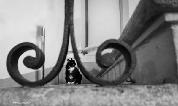 teresa cat