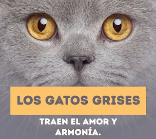 Los gatos grises