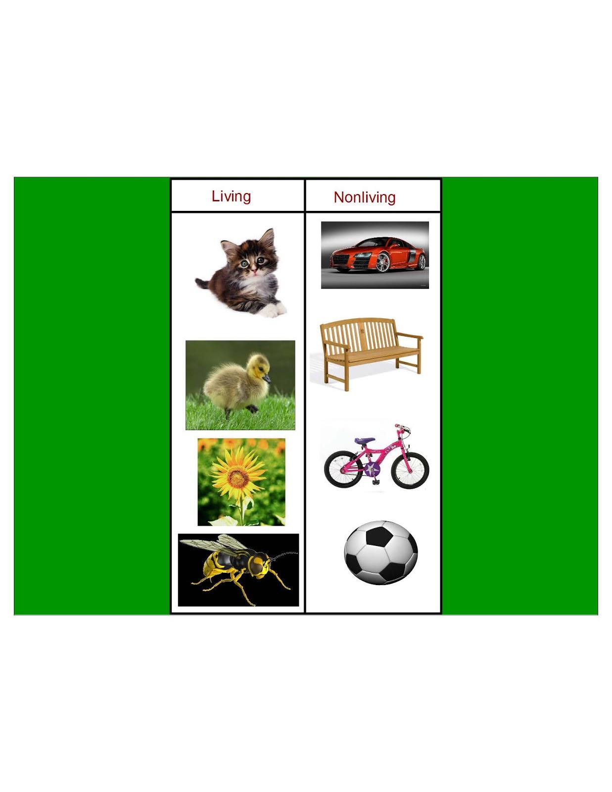 Living Or Nonliving Worksheet