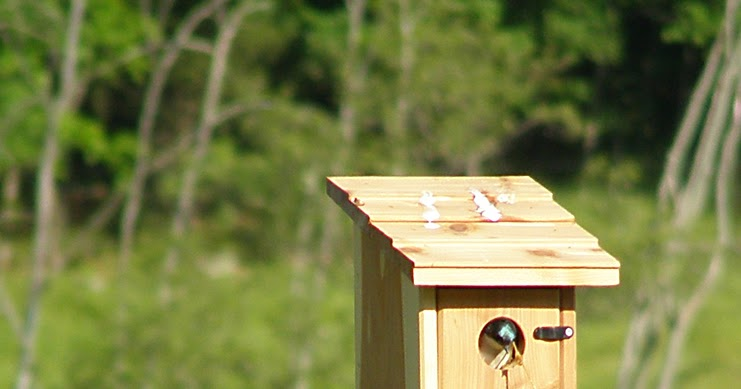 Our Barn Swallow Friends: Two Nest Boxes, Two Bird ...