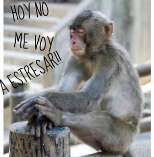 imagenes - animales - chistosos- frases - risa - whatsapp