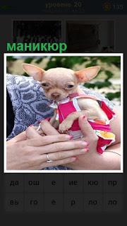 в руках женщины маленькая собачка и сделан маникюр красного цвета