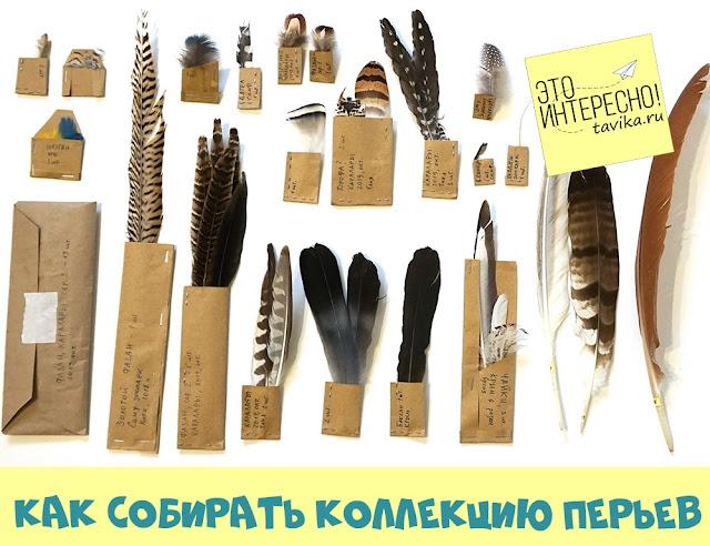 коллекция перьев. как собирать