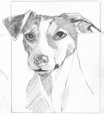 dot to line contour drawing of a serious terrier