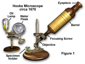 The Beauty of Science: Beauty of science through microscopes