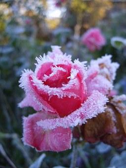Give \'em the old Razzle Dazzle: Des fleurs de ton jardin