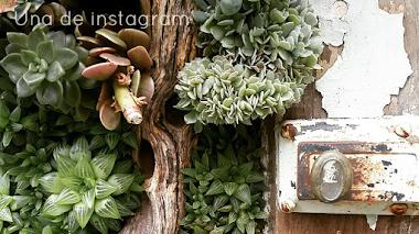 Una de Instagram. Succulent Cafe Oceanside