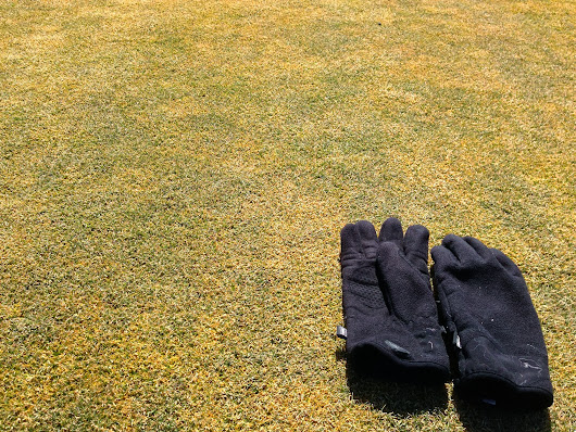 Transitioning the Poa Out of Fairways-A Progress Report