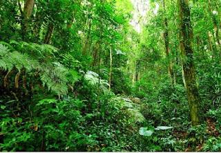 Hutan Lingkungan Alam