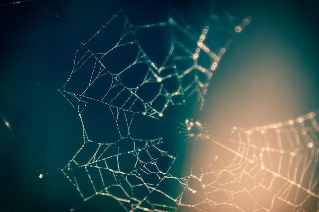 Networking: Estamos todos em uma única rede