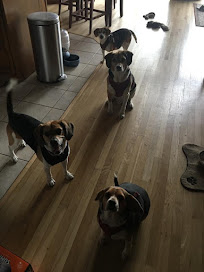 Macy. Hank, Cooper and Joy