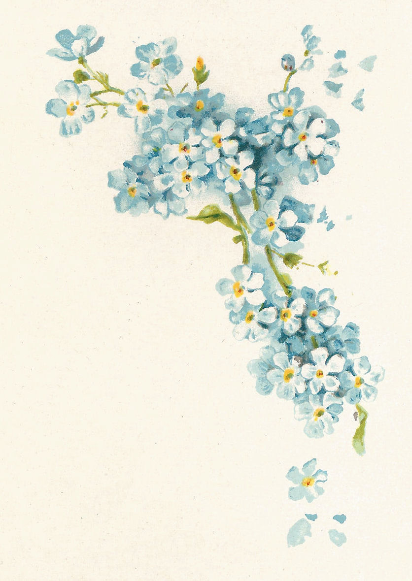 Free Vintage Flower Graphic Blue Forget Me Not Flowers Corner Design