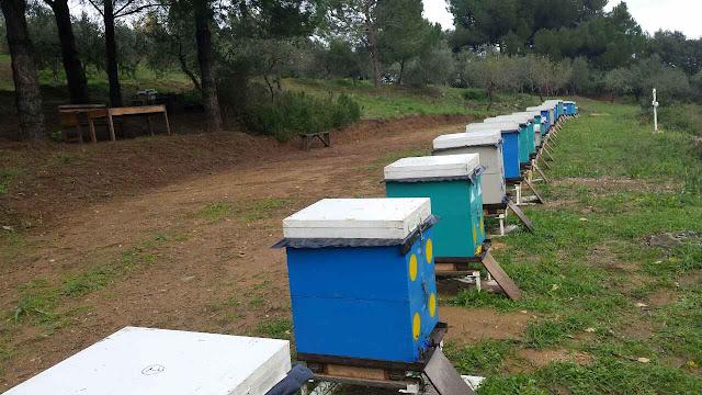 Διεύθυνση Δασών Αργολίδας: Ρυθμίσεις για την τοποθέτηση μελισσοσμηνών