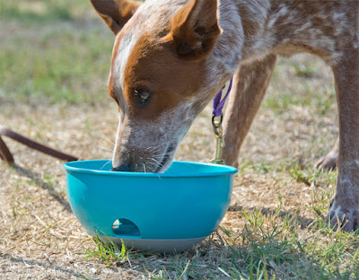 Self-loading puzzle feeder food toy for dogs