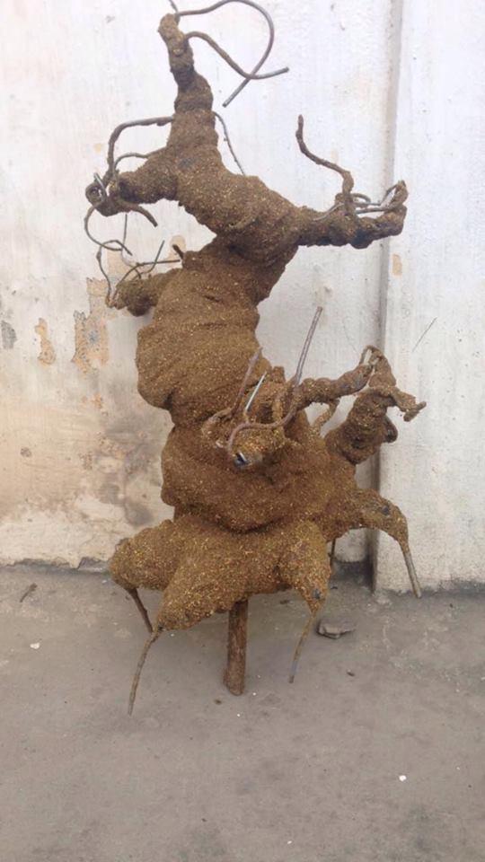 Goc bonsai mai dao o Cao Thang