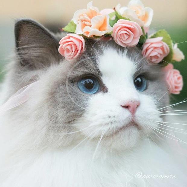 Ngắm nhìn em mèo tiểu thư sang chảnh nhất thế giới