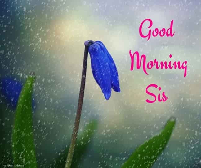 good morning sis images