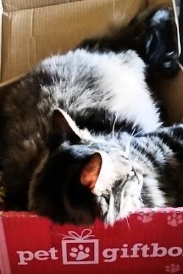 Pet GiftBox: July, 2016
