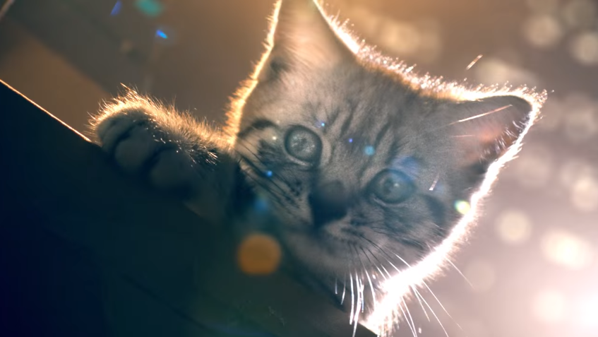 See This Tiny Cat Restores Law and Order In New Whiskas Ad Developed by BBDO Düsseldorf