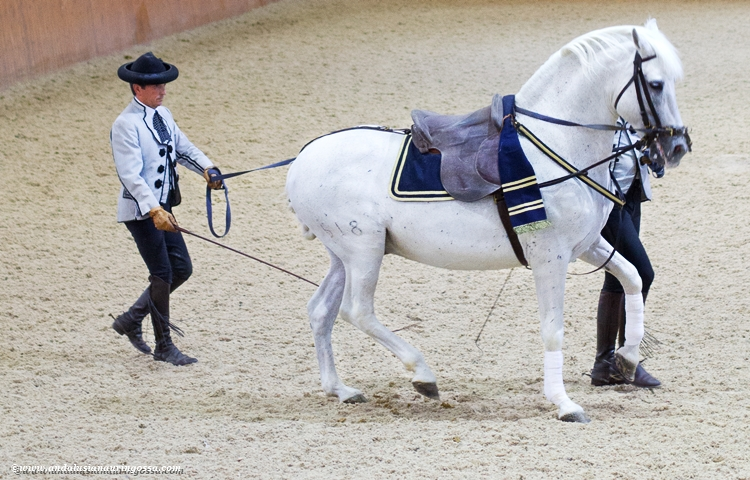 Andalusian kuninkaallinen hevoskoulu Jerez_Andalusian Royal Equestrian School Jerez_7