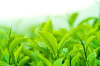 http://dailygoodhealthtips.blogspot.in/2016/10/green-tea.html