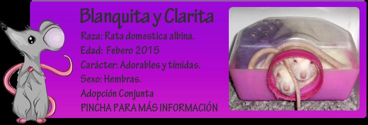 http://almaexoticos.blogspot.com.es/2015/04/clarita-y-blanquita-ratitas-adorables.html