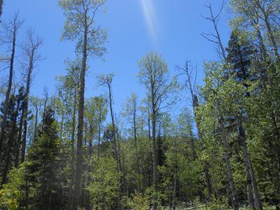 spiritual presence, sunlight, nature, spiritual nature, trees, blue sky