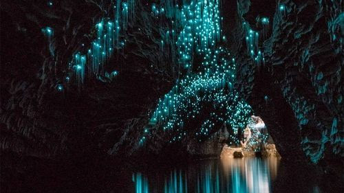 Mesmerized by the Glowworms at Waitomo Caves in New Zealand