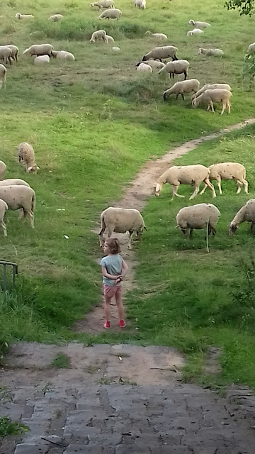 mouton bord du rhin - voyage en camping-car