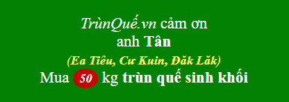 Trùn quế Cư Kuin: chuyên trùn quế giống (sinh khối)