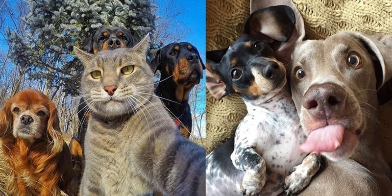 Đứng hình trước loạt ảnh selfie chất lừ của hội động vật siêu quậy