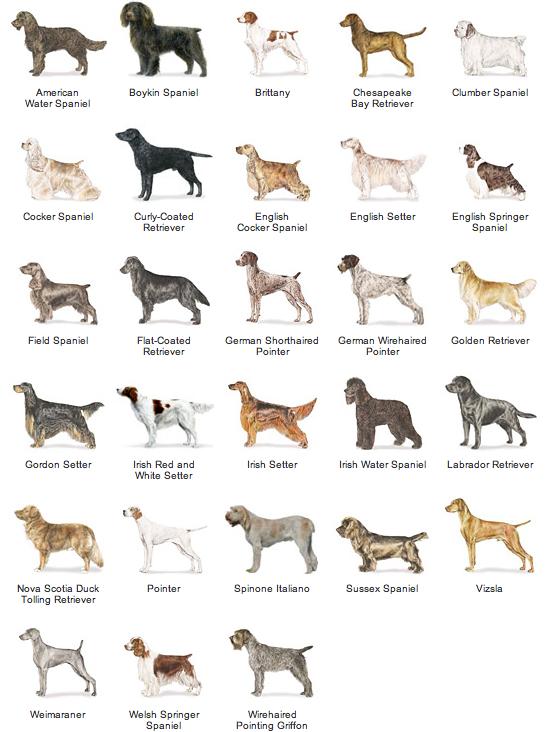 Toy Non Shedding Dog Breeds Dog Breeds
