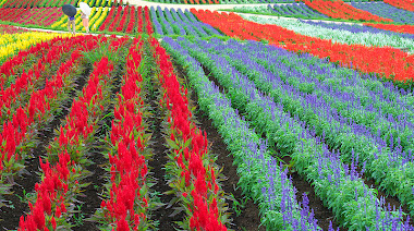 Muchas flores que ver