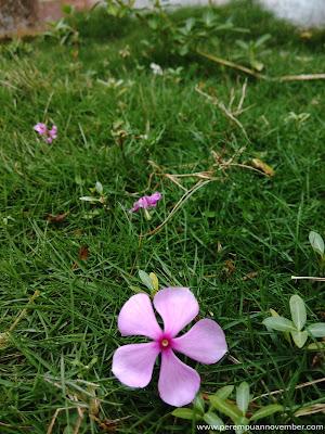 bunga-bunga indah hasil jepretan fotographer amatir