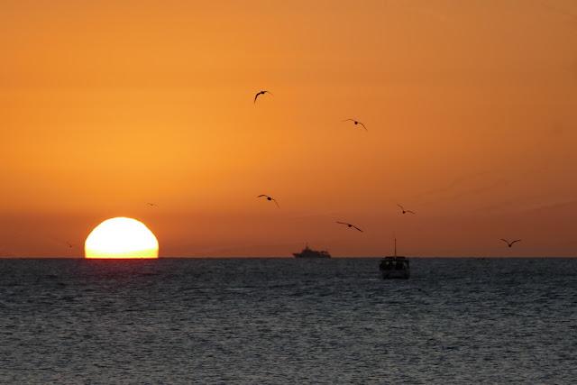romantisch Sonnenuntergang Heron Island Insel Meer Sonne Vögel Schiff