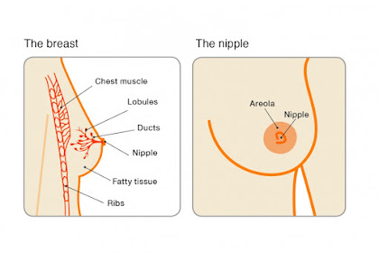 Differentiating the Characteristics of Normal and Abnormal Breast Nipples