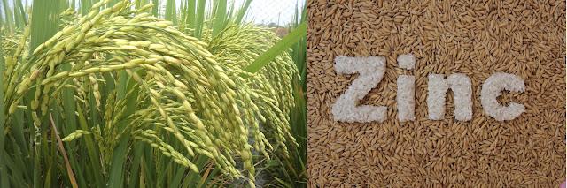 Indira Gandhi Agricultural University Developed Crop Five New varieties
