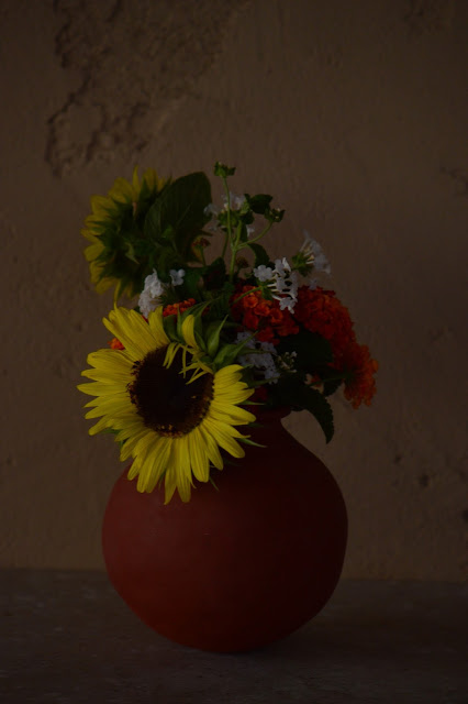 monday vase meme, sunflowers, solar eclipse, lantana, denver red, amy myers, photography, small sunny garden, desert garden