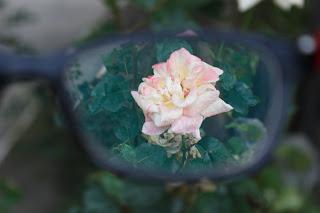 Gözlüklü ve Lensli