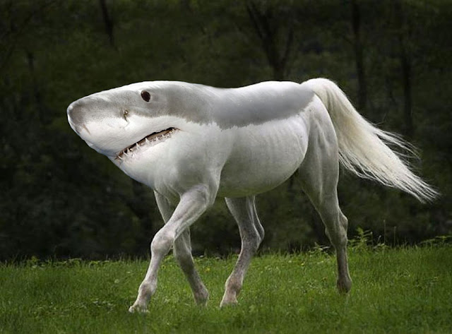 Photoshopped Animals