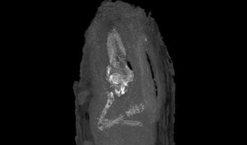 Αιγυπτιακή σαρκοφάγος περιείχε μουμιοποιημένο έμβρυο 18 εβδομάδων