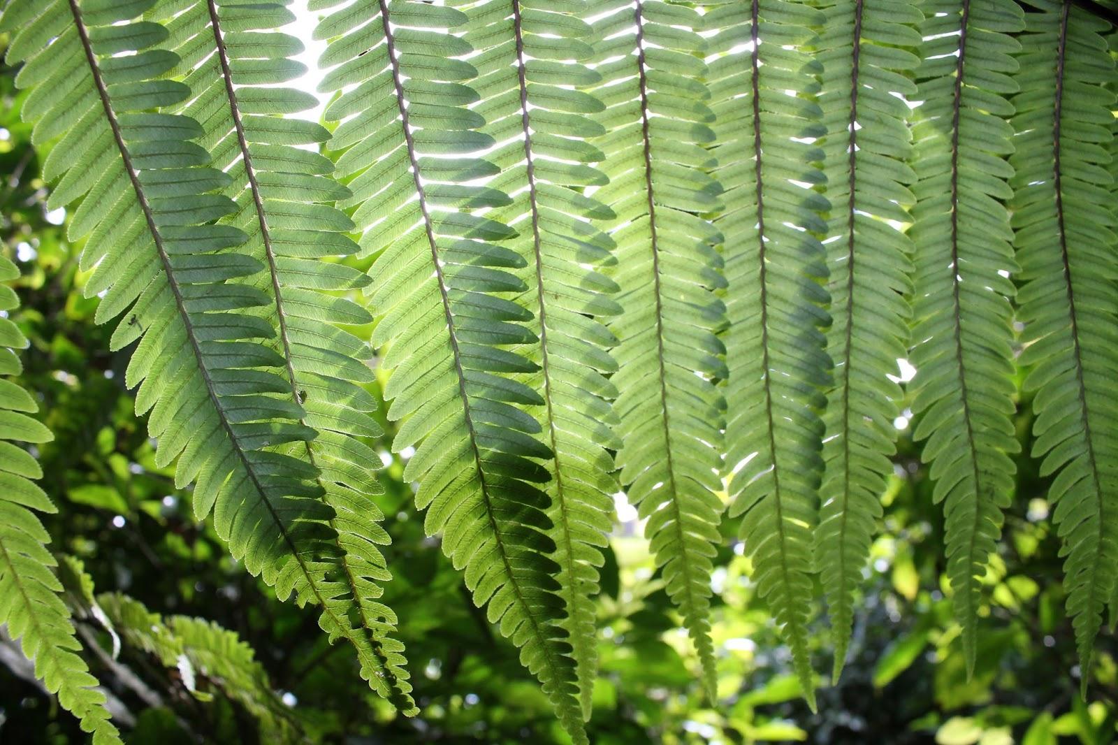 réunion île gotoreunion labyrinthe en champ thé tea grand coude visite à faire jumbocar irt tourisme 974 arbre theier