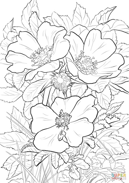 Click The Wild Prairie Rose Coloring Pages
