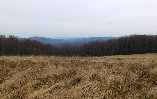 Widok z Rosochy na Łopiennik (1069 m n.p.m.) i Czereninę (981 m n.p.m.).