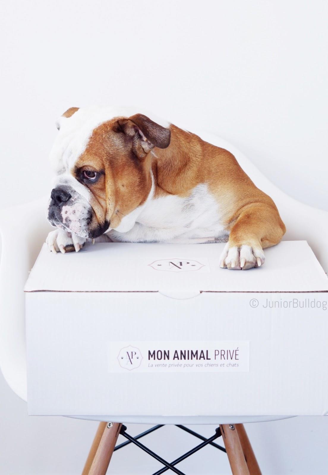 mon animal privé ventes privées animaux