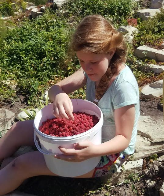 ягода - малина
